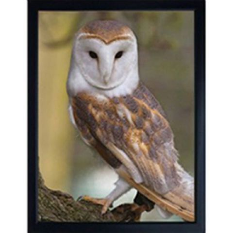 BARN OWL 3D FRIDGE MAGNET